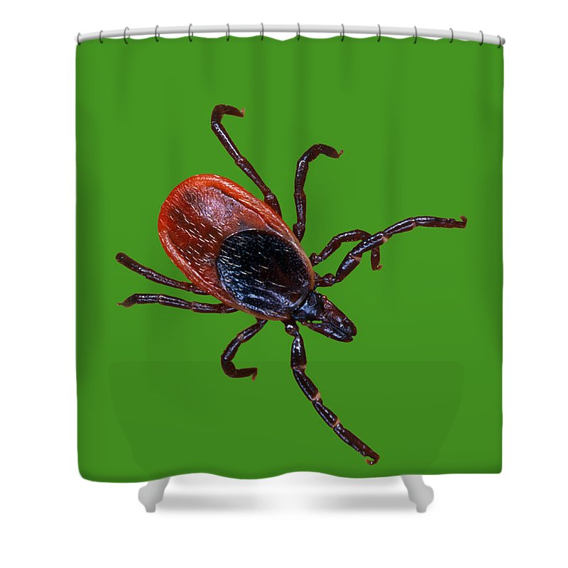 Animal Shower Curtain featuring the photograph Female Blacklegged Tick by Science Source