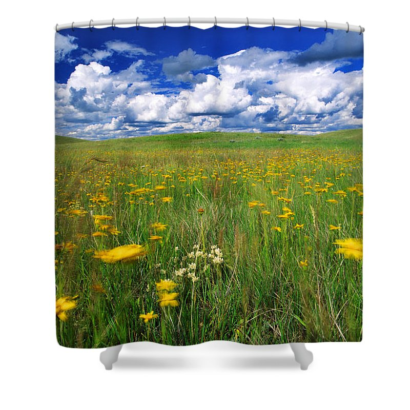 Light Shower Curtain featuring the photograph Field Of Flowers, Grasslands National by Robert Postma