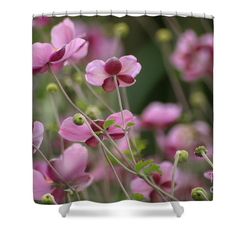Floral Shower Curtain featuring the photograph Field Of Japanese Anemones by Living Color Photography Lorraine Lynch