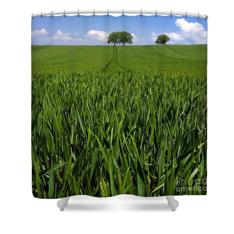Wheat Shower Curtain featuring the photograph Field Of Wheat. Auvergne. France. Europe by Bernard Jaubert