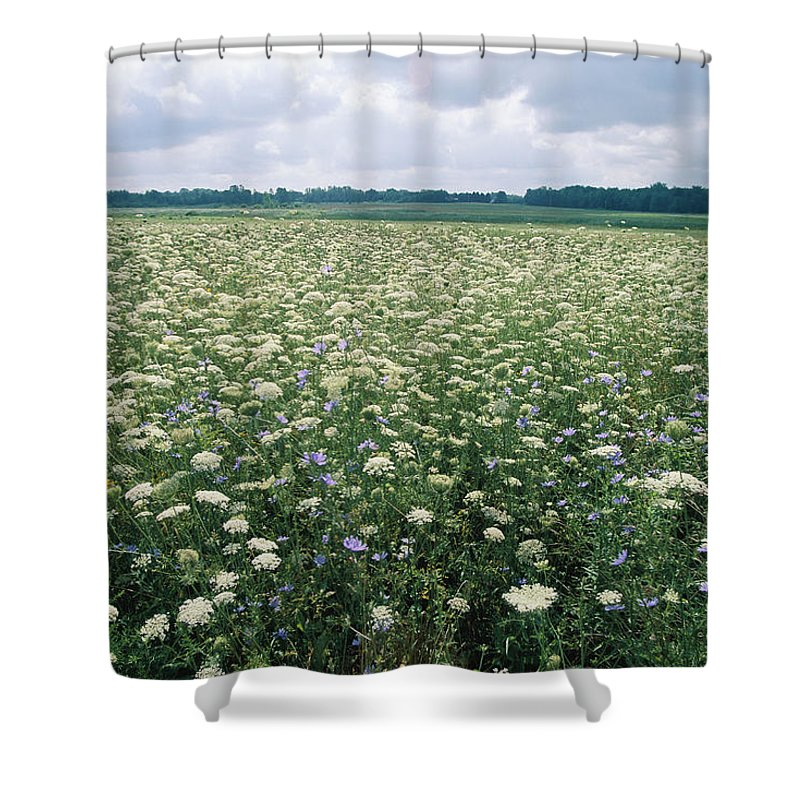North America Shower Curtain featuring the photograph Field Of Wildflowers, Montezuma by Skip Brown