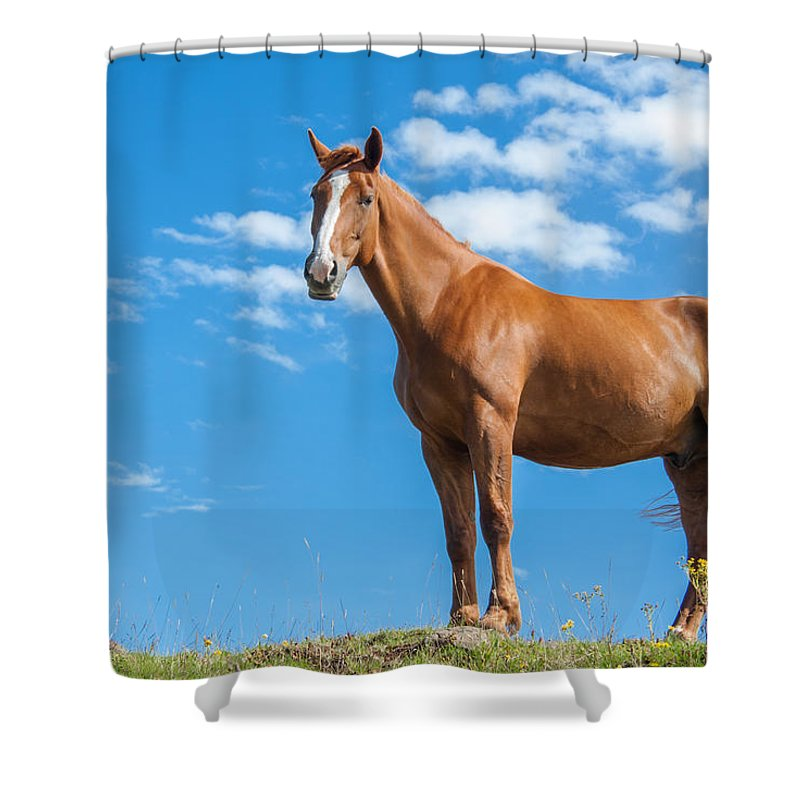 Animal Shower Curtain featuring the photograph Fierce by Semmick Photo
