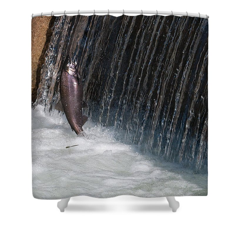 Fish Shower Curtain featuring the photograph Fighting Upstream by David Arment