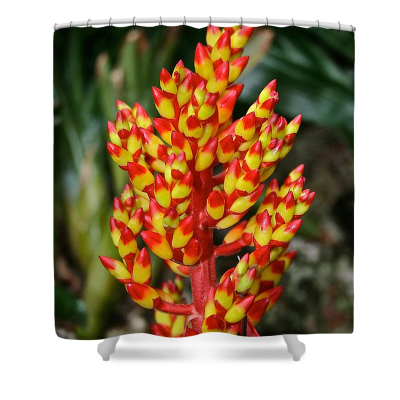 Tropical Plant Shower Curtain featuring the photograph Firecracker by Susan Herber