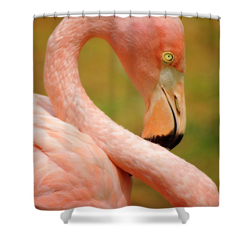 Acrobat Shower Curtain featuring the photograph Flamingo by Carlos Caetano