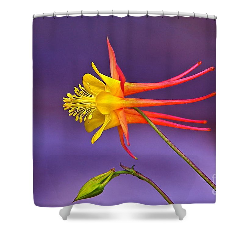 Flight Of Fancy Shower Curtain featuring the photograph Flight Of Fancy by Byron Varvarigos