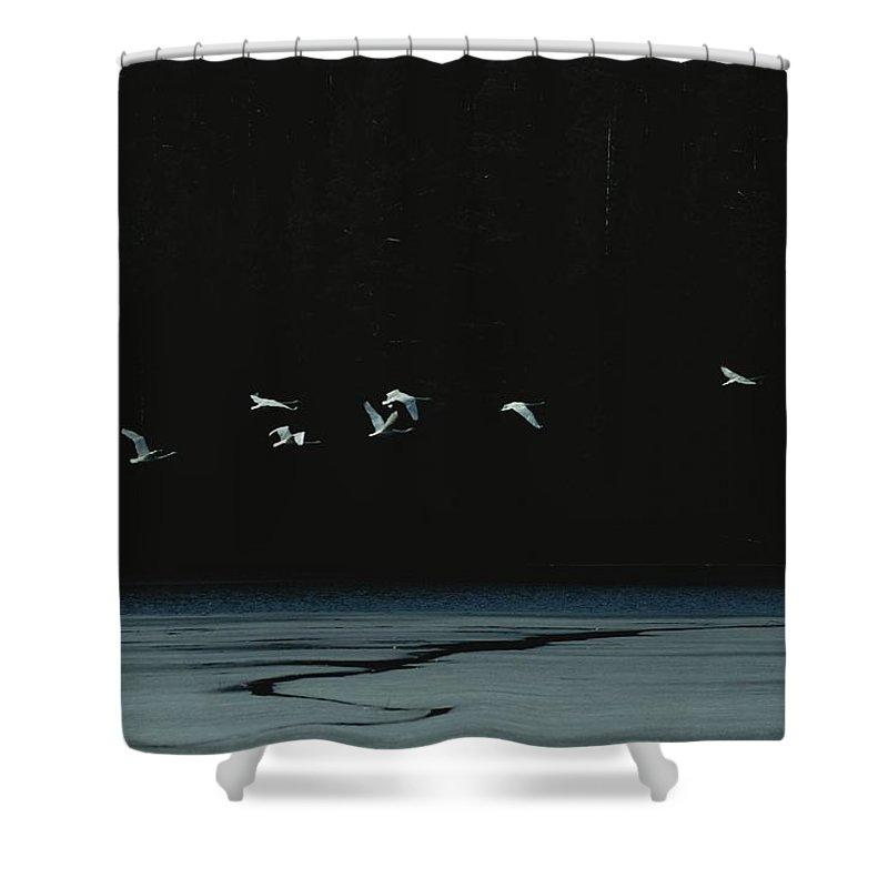 Animals Shower Curtain featuring the photograph Flock Of Flying Seabirds by Mattias Klum