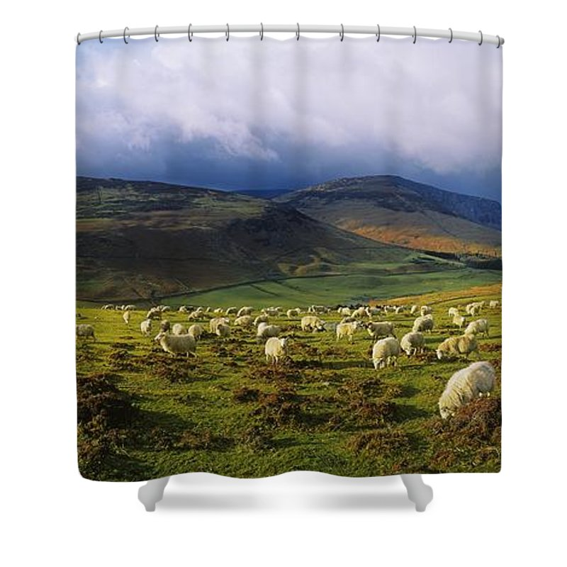 Co Wicklow Shower Curtain featuring the photograph Flock Of Sheep Grazing In A Field by The Irish Image Collection