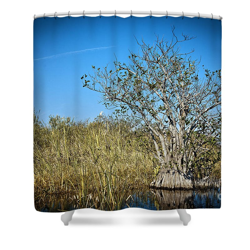 Grass Shower Curtain featuring the photograph Florida Everglades 8 by Madeline Ellis