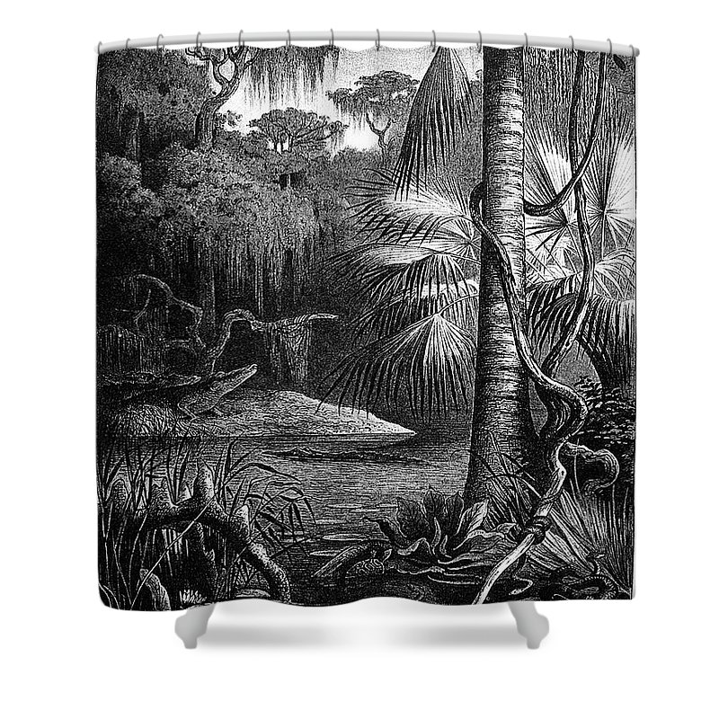 19th Century Shower Curtain featuring the photograph Florida: Swamp by Granger