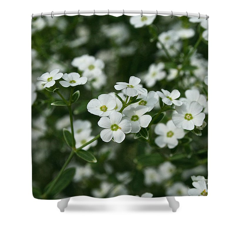 Outdoors Shower Curtain featuring the photograph Flowering Spurge by Susan Herber