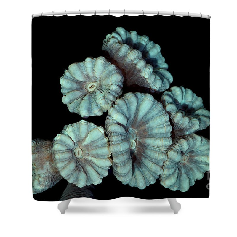 Animal Shower Curtain featuring the photograph Fluorescent Coral In In White Light by Ted Kinsman