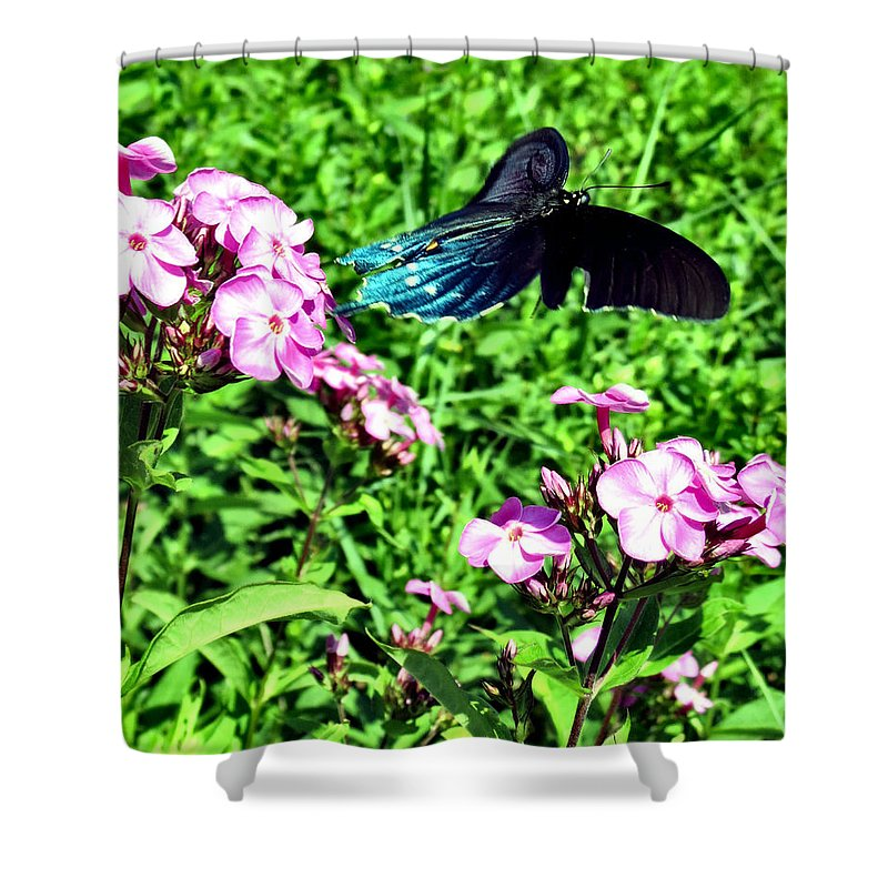 Comma Shower Curtain featuring the photograph Fly Away by Art Dingo