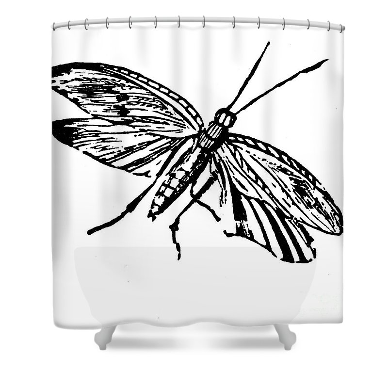 19th Century Shower Curtain featuring the photograph Flying Insect by Granger