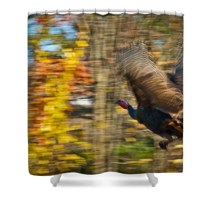 Nature Shower Curtain featuring the photograph Flying Wild Turkey Escapes Thanksgiving by Jiayin Ma