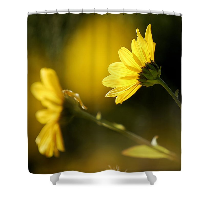 Flower Shower Curtain featuring the photograph Focos De Luz by Guido Montanes Castillo