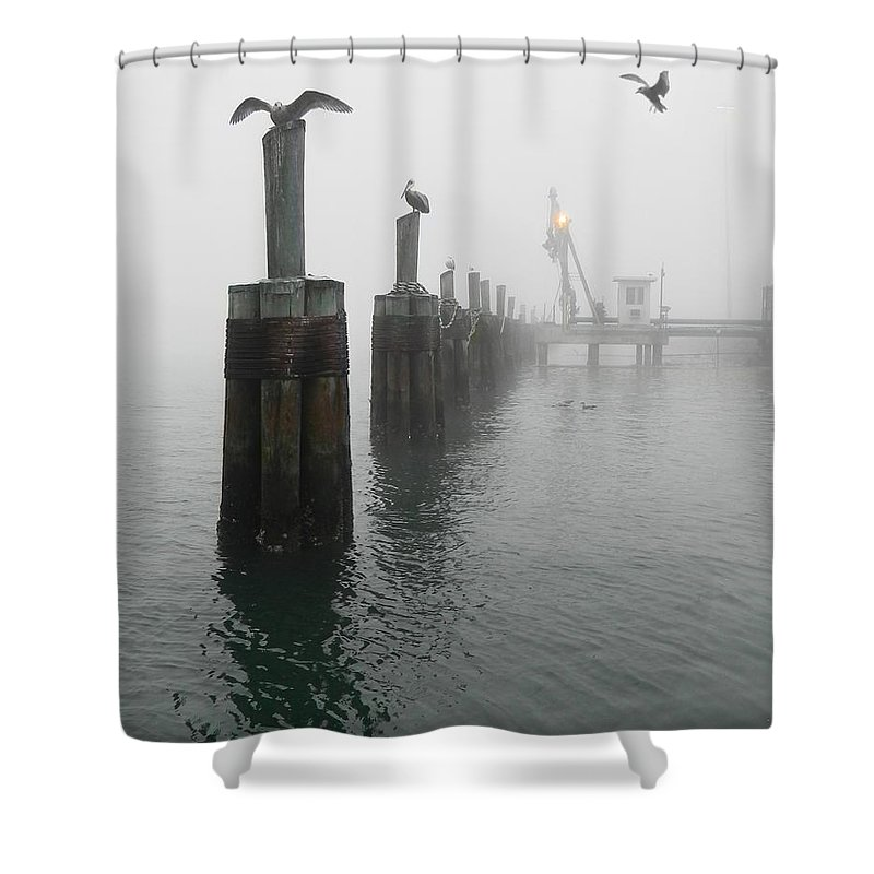 Birds Shower Curtain featuring the photograph Foggy Pier by Francesa Miller