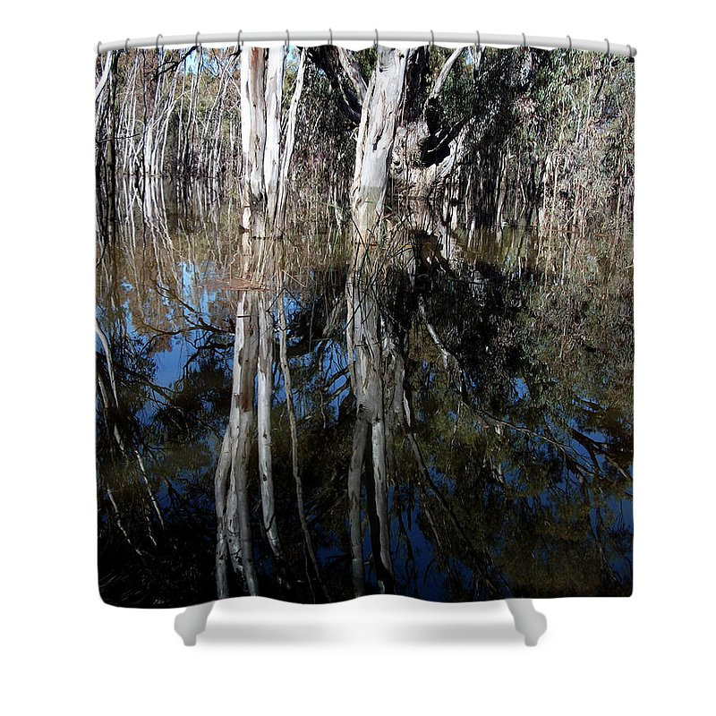 Forest Shower Curtain featuring the photograph Forest Spin by Karen Elzinga