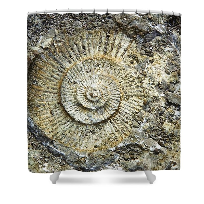 Day Shower Curtain featuring the photograph Fossil Geology by Sici