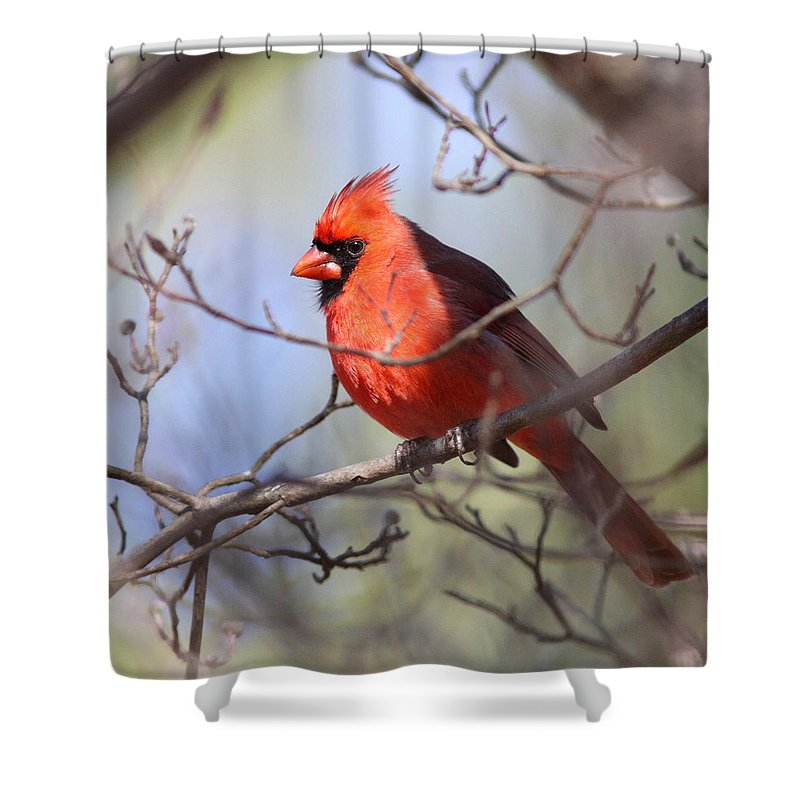 Shower Curtain featuring the photograph Framed by Travis Truelove