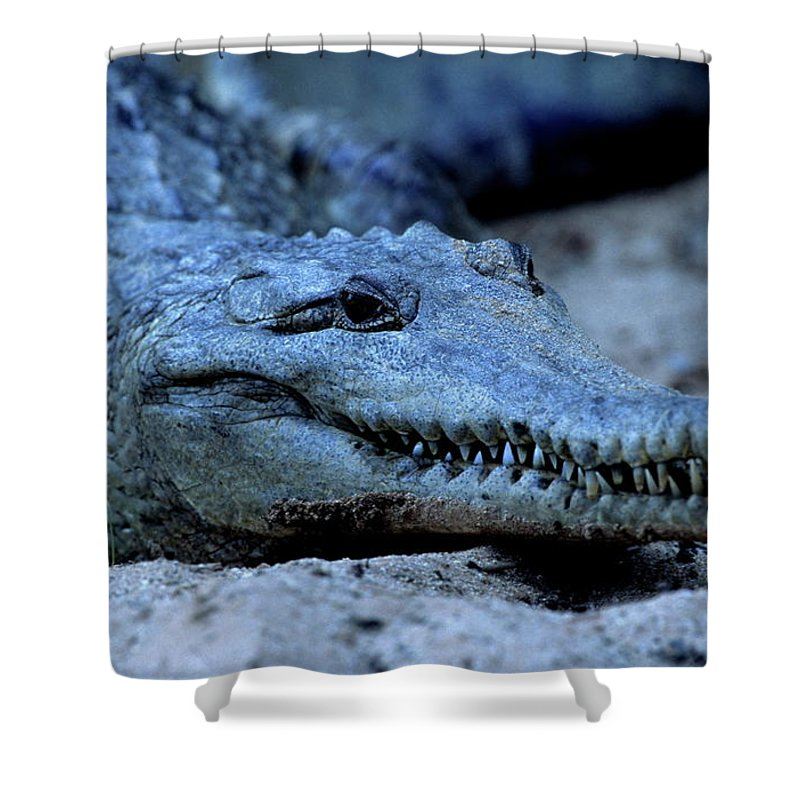 Reptiles Shower Curtain featuring the photograph Freshwater Crocodile by Bruce J Robinson