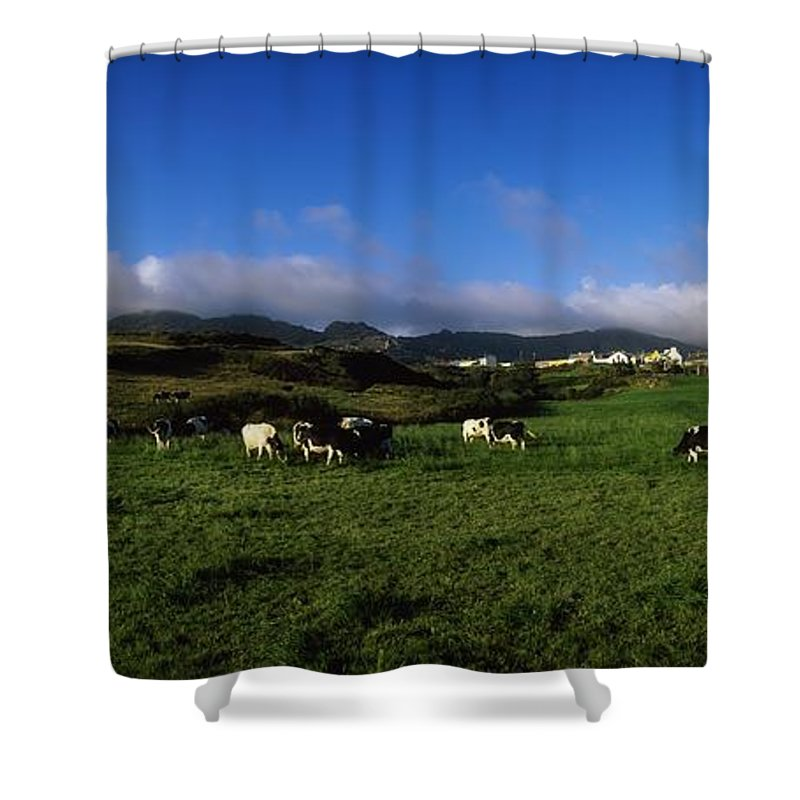 Animals Shower Curtain featuring the photograph Friesian Cattle, Allihies, Co Cork by The Irish Image Collection