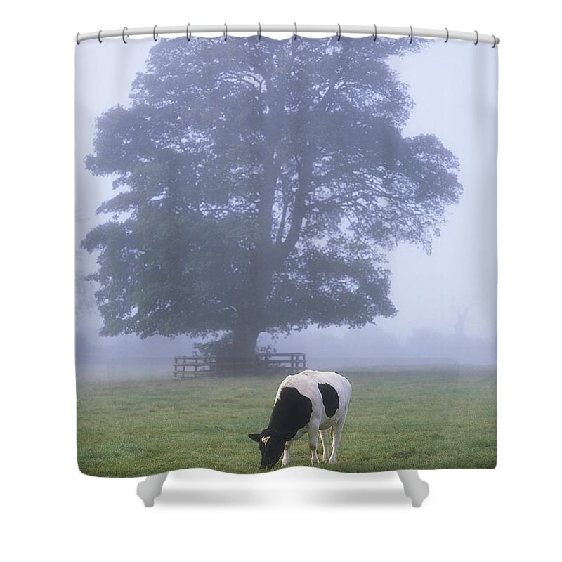 Animals Shower Curtain featuring the photograph Friesian Cow, Ireland by The Irish Image Collection