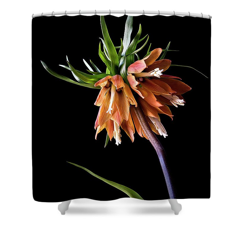 Flower Shower Curtain featuring the photograph Frittilaria by Endre Balogh