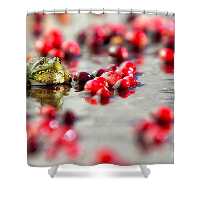 Fall Shower Curtain Featuring The Photograph Frog At A Cape Cod Cranberry Bog By Matt Suess
