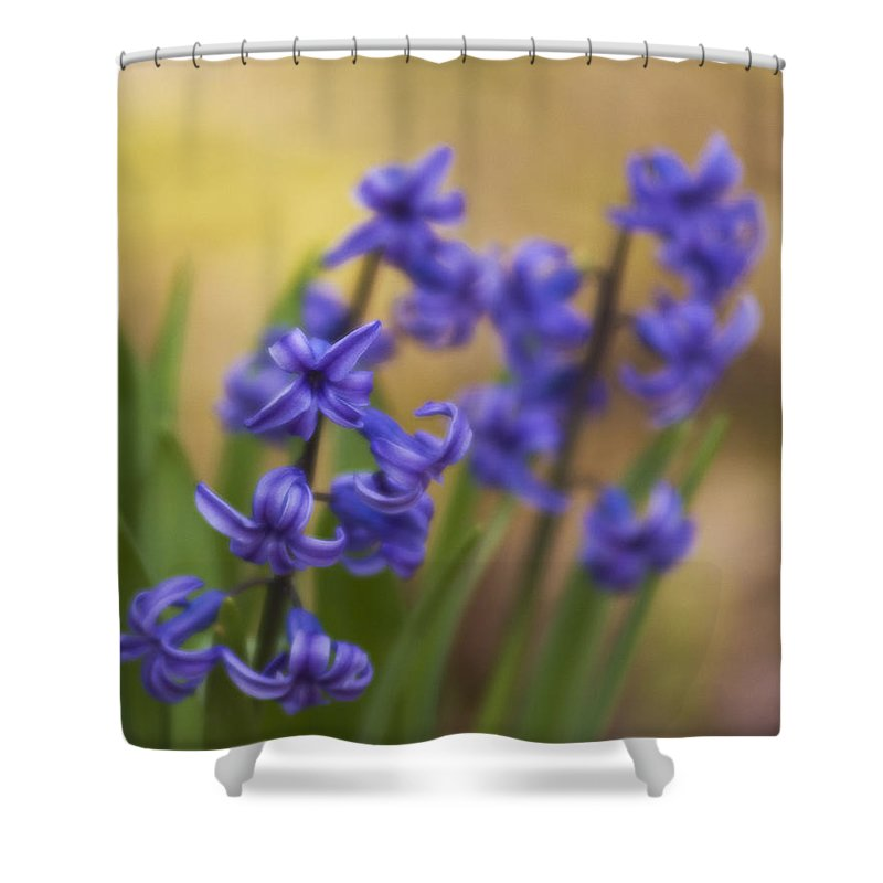Flowers Shower Curtain featuring the photograph From The Garden by Steven Richardson