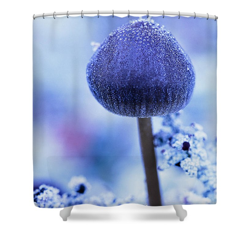 Light Shower Curtain featuring the photograph Frost Covered Mushroom, North Canol by Robert Postma