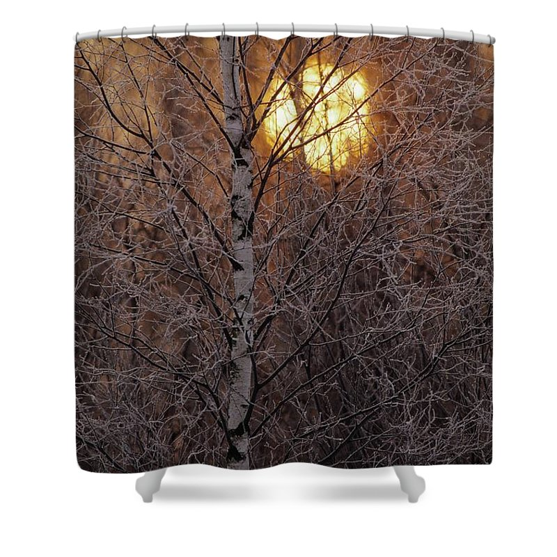 Bialowieza Forest Shower Curtain featuring the photograph Frost-covered White Birch Trees by Raymond Gehman