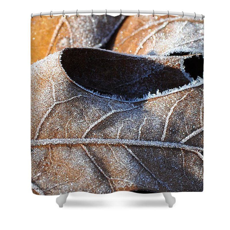 Leaves Shower Curtain featuring the photograph Frost On Oak Leaf by Christine Stonebridge