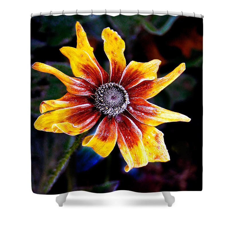 Flower Shower Curtain featuring the photograph Frosty Susan by Jean Noren