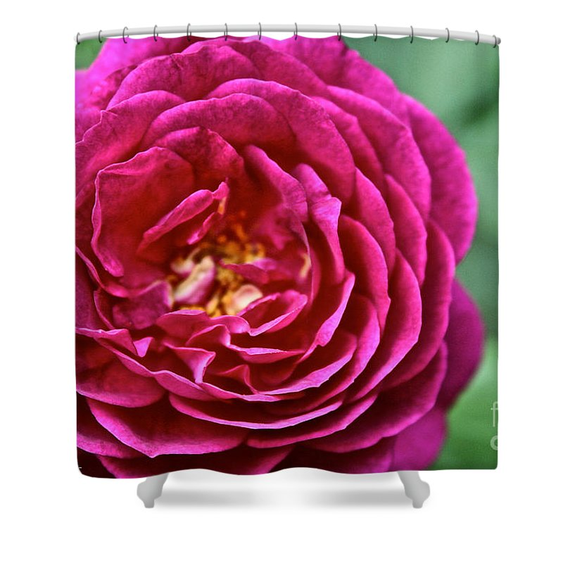 Garden Shower Curtain featuring the photograph Full Bloom by Susan Herber