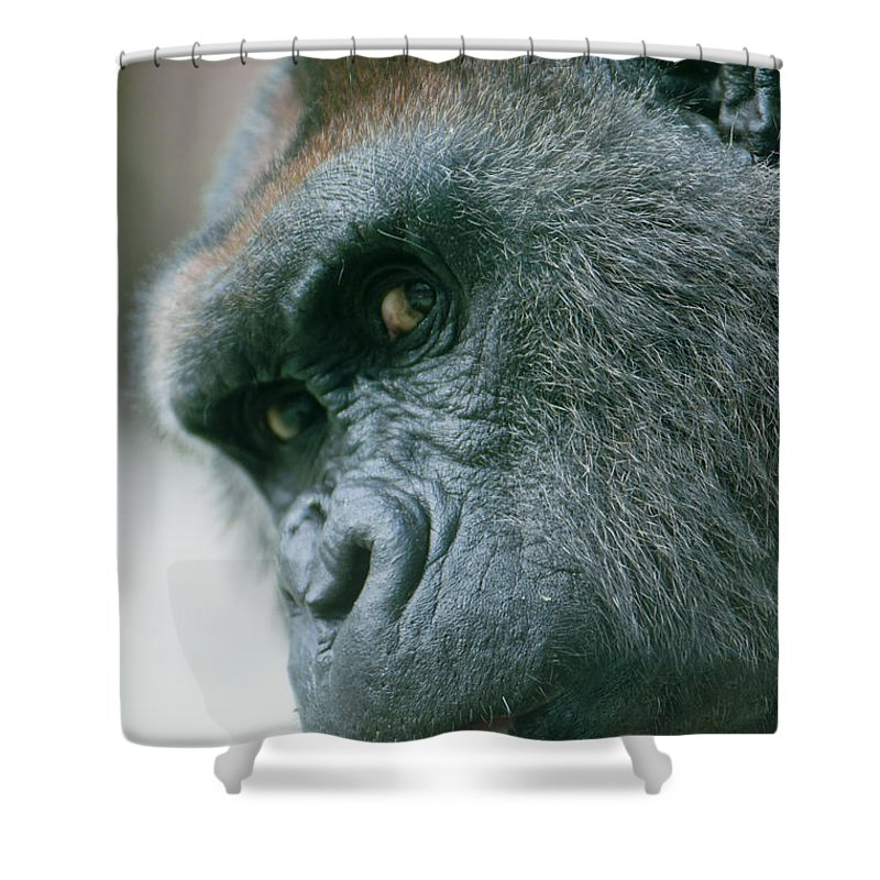 Africa Shower Curtain featuring the photograph Funny Gorilla by Andrew Michael