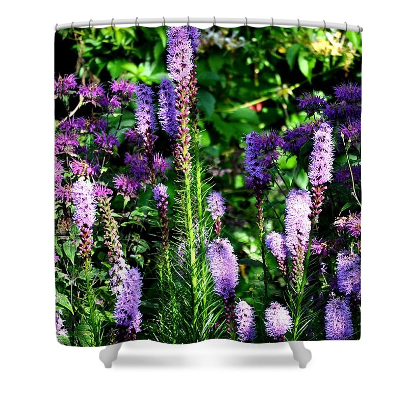 Flowers Shower Curtain featuring the painting Garden Flowers 1 by Pol Ledent