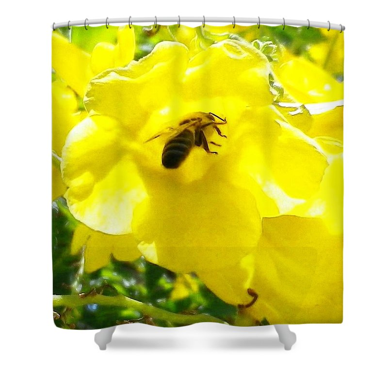 Yellow Bell Flower Shower Curtain featuring the photograph Getting The Goods by Jonathan Barnes