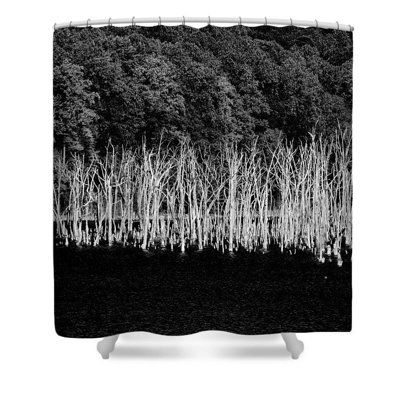 Forest Shower Curtain featuring the photograph Ghostwood by Joseph Noonan