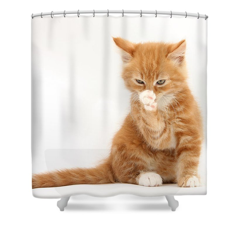 Animal Shower Curtain featuring the photograph Ginger Kitten by Mark Taylor