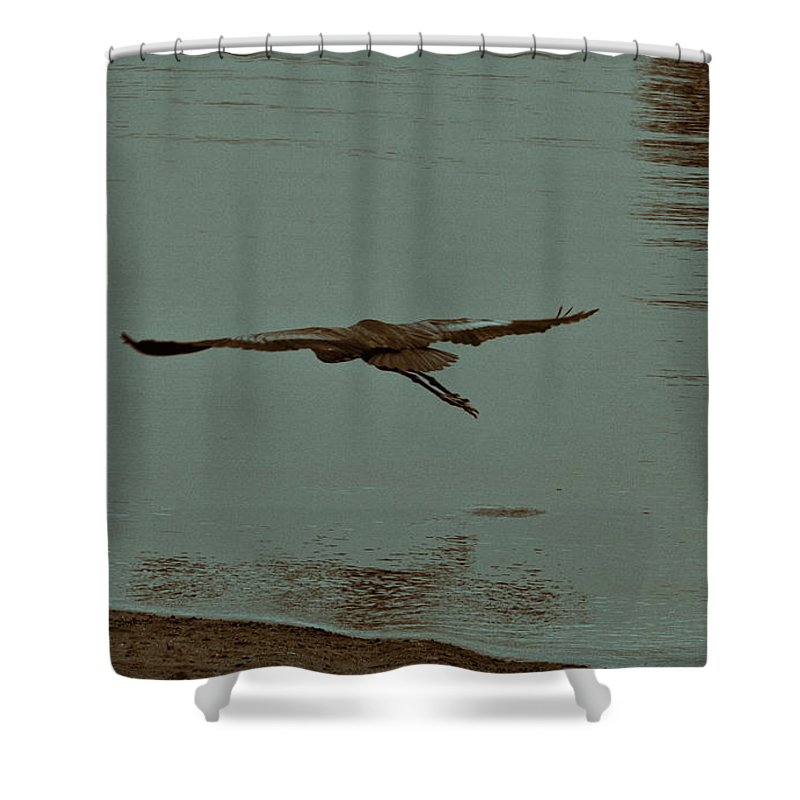 Blue Heron Shower Curtain featuring the photograph Gliding Inches Above The Water by Douglas Barnard