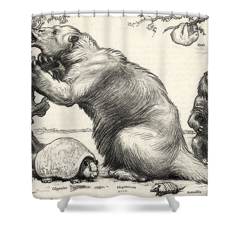 Animal Shower Curtain featuring the photograph Glyptodon And Megatherium, Extinct Fauna by Science Source