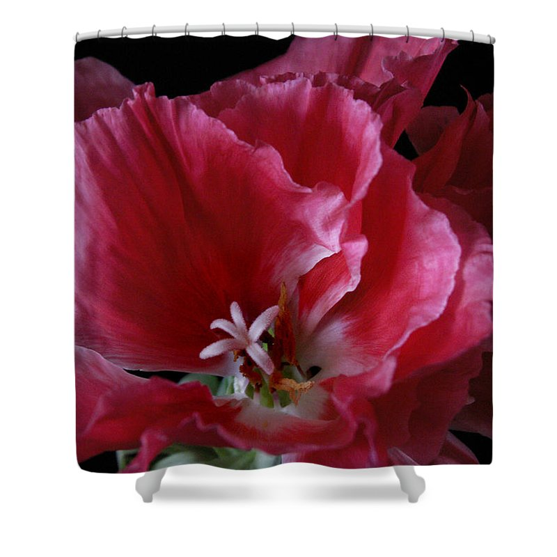 Flower Shower Curtain featuring the photograph Godieta Flower Detail by Nancy Griswold