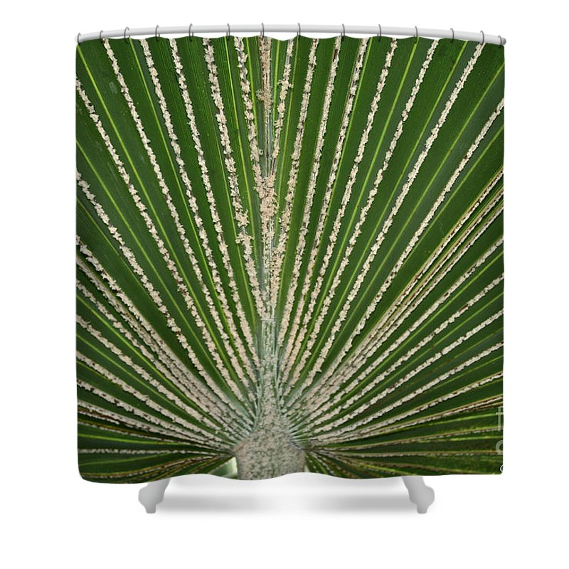 Tropical Plant Shower Curtain featuring the photograph Going Green by Susan Herber