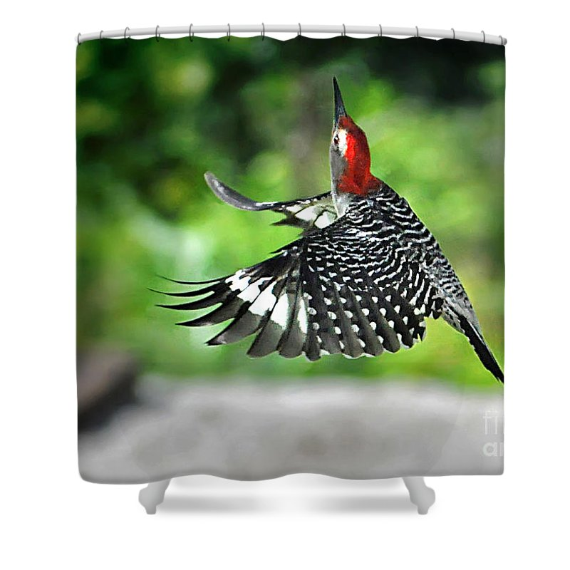 Nqture Shower Curtain featuring the photograph Going Home by Nava Thompson