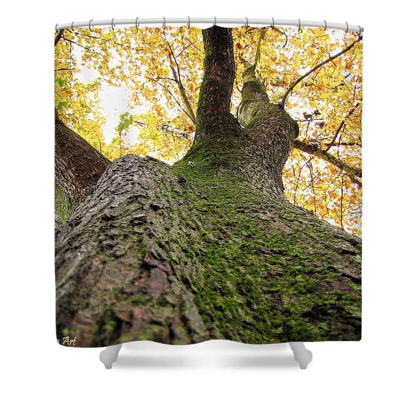 Nature Shower Curtain featuring the photograph Golden Canopy by Debbie Portwood