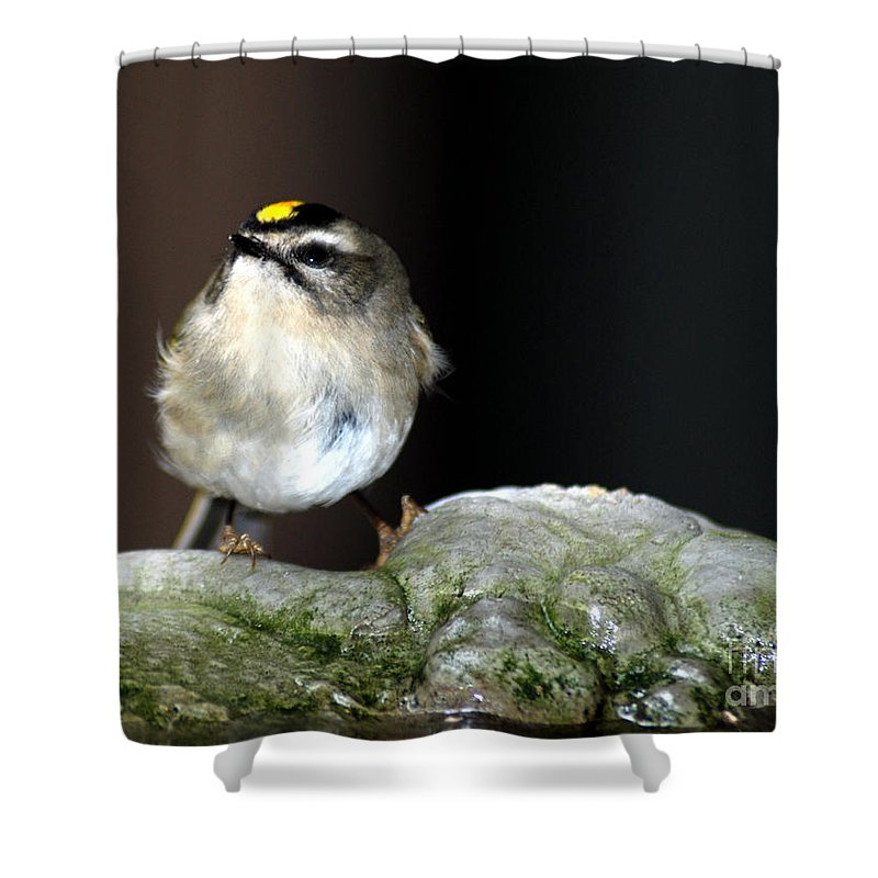 Golden-crowned Kinglet Shower Curtain featuring the photograph Golden-crowned Kinglet by Optical Playground By MP Ray