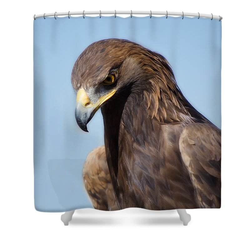 Eagle Shower Curtain Featuring The Photograph Golden By Donna Greene