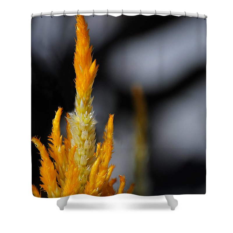 Black Shower Curtain featuring the photograph Goldenrod by Jai Johnson