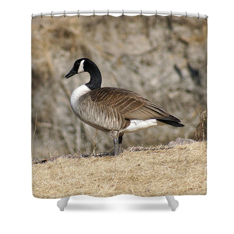 Goose Shower Curtain featuring the photograph Goose Standing Still by Lori Tordsen